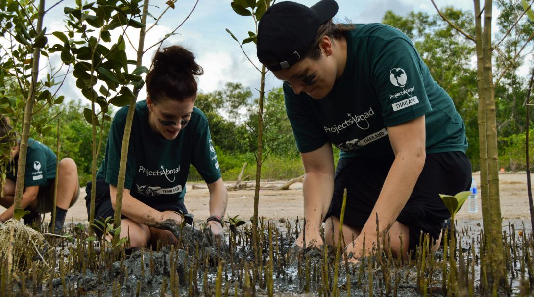 Conservation interns plant mangrove propagules during their project in Thailand.